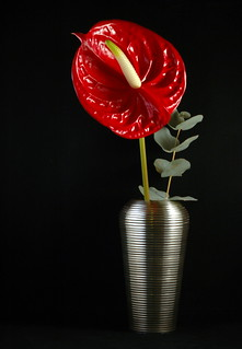 Anthurium in vase_1850