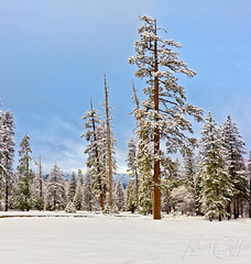 Yosemite ~ Snow in the Village by k.griffis