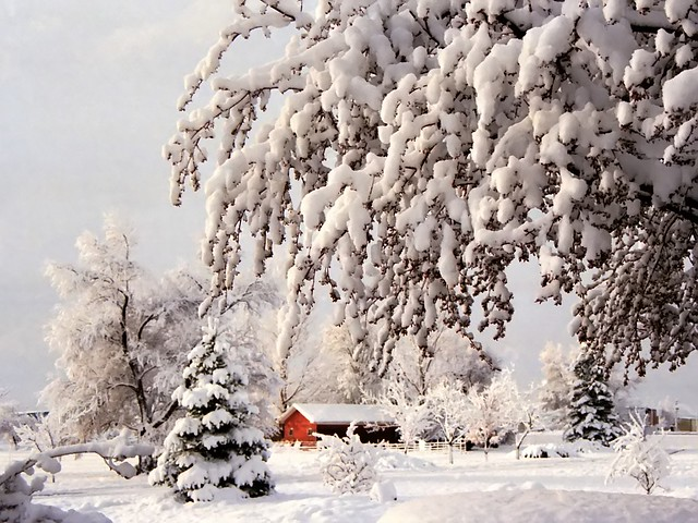 White Winter Wonderland - Boulder, USA