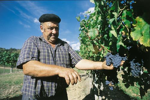 Viticulteur dans le vignoble d'Irouléguy Pays Basque Pyrénées Atlantiques France