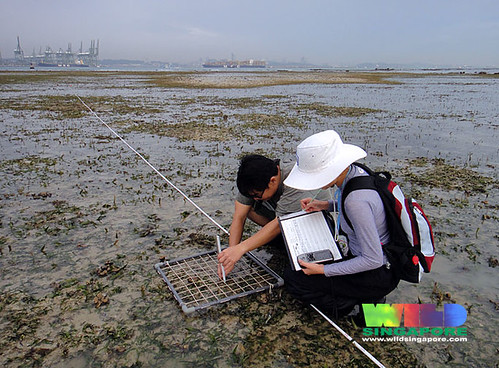 TeamSeagrass at Cyrene Reef
