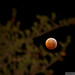 Lunar Eclipse, Dec 21 2010 by Ranger3500