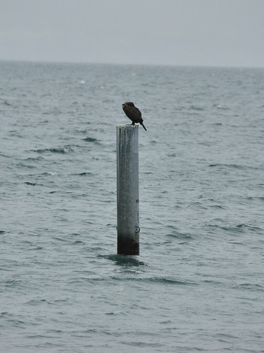 Bird on the pole