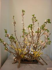Japanese flower arrangement 30, Ikebana: いけばな