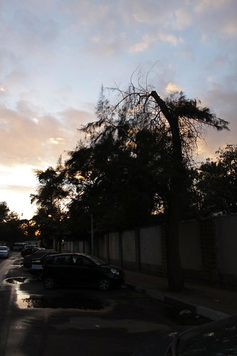 road street winter sunset tree water rain canon puddle egypt cairo maadi 500d canon500d t1i digitalrebelt1i