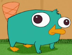 Baby perry the platypus flickr photo sharing