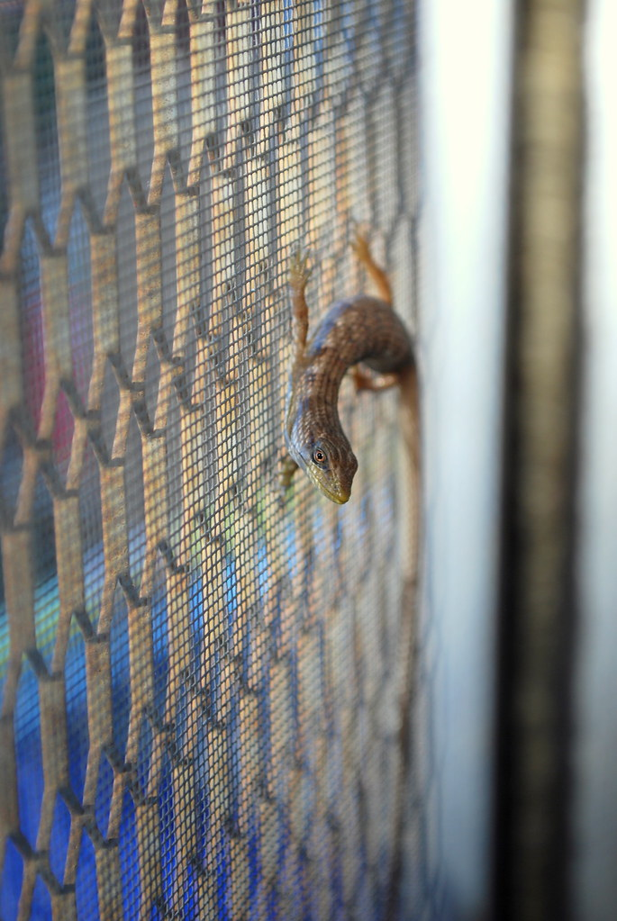 is a lizard in your house considered good luck? | Let's hope