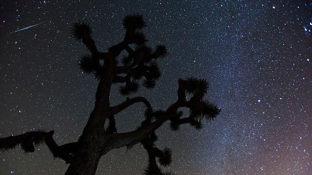 Geminid Meteor above a Joshua Tree