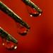 drip drop by Mark Bonica