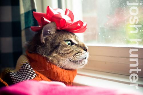 Goob Loves Christmas