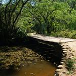 Bild von Botanical Garden in der Nähe von Porto Alegre. bridge shadow pond botanicalgarden