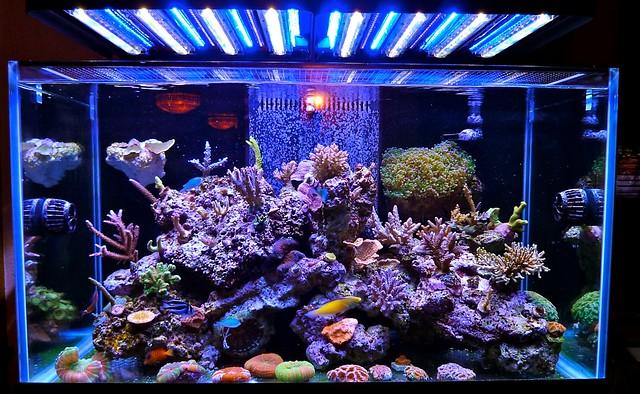 Stunning Marine Reef Aquarium with Ecoxotic LED Lighting Flickr ...