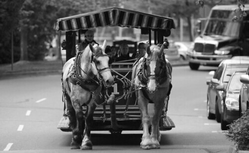Stanley Park Horse Ride