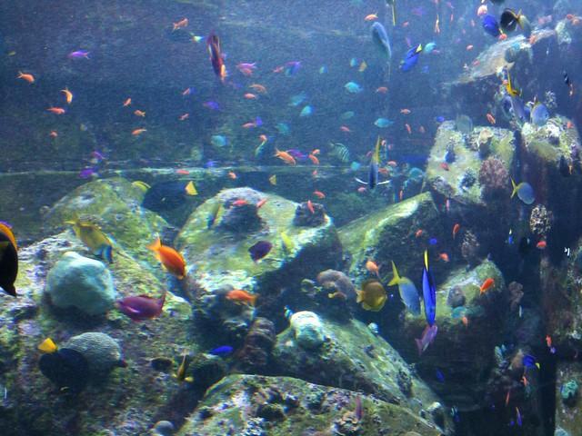 Atlantis Aquarium Dubai Flickr Photo Sharing