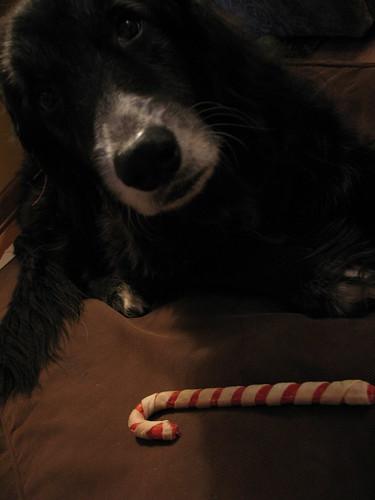 """Old Dog says """"Merry Christmas!"""""""