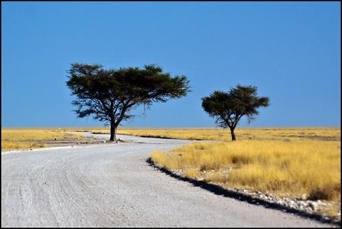 etosha namibia2010