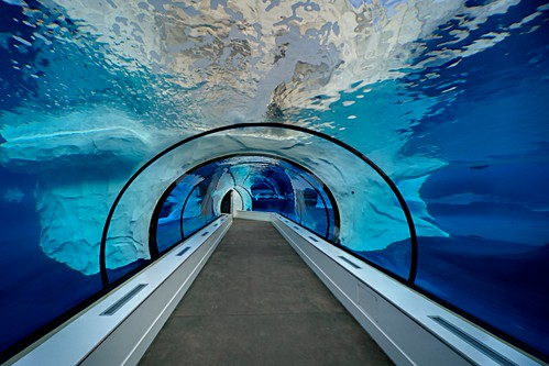 Zoo Tunnel Centered