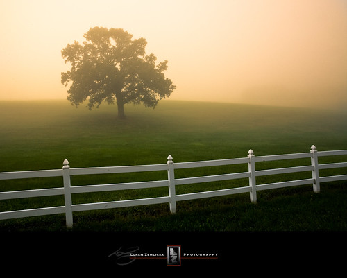 morning usa mist tree green grass lines fog wisconsin rural sunrise fence landscape outdoors photography dawn countryside photo midwest scenery glow image country hill picture september explore northamerica canonef1740mmf4lusm whitefence lonetree solitarytree fitchburg canoneos5d flickrexplore danecounty lorenzemlicka