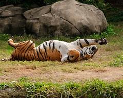 Enjoying a Nice Stretch