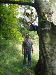 Jamie practising SRT in a tree with Si overlooking Image