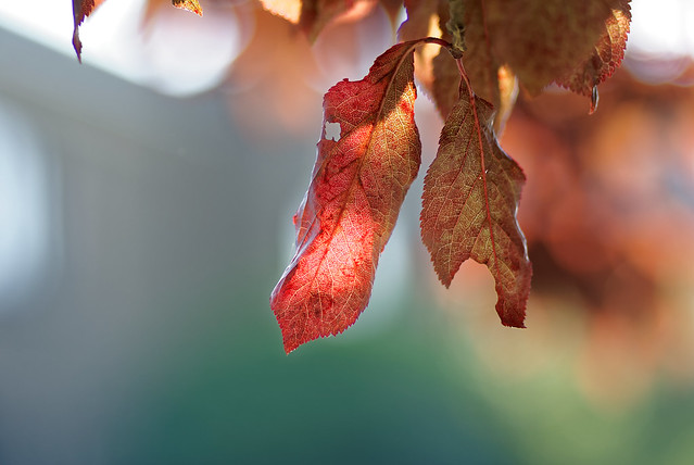 Lumière d'automne - Light of fall