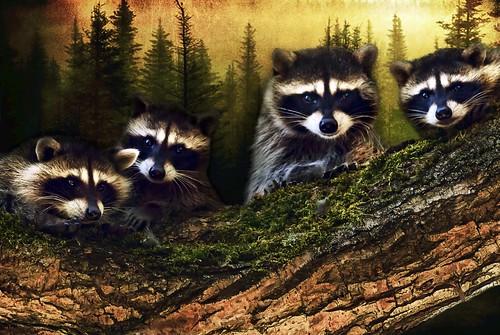 Woodland Family