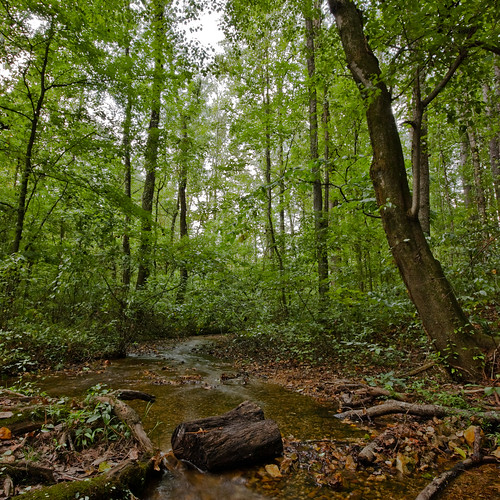 statepark trees water creek forest woods stream tennessee redclay bradleycounty