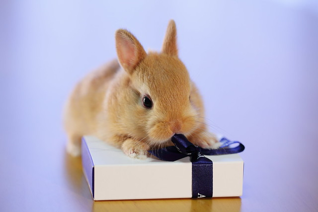 Bunny Opening a Gift