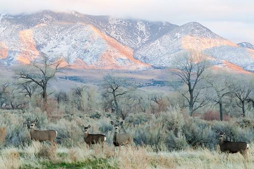 winter sunset nature wildlife deer