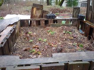 "On ""Guerilla Fertilizing"" and San Francisco's Mandatory Composting"