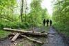 Hambacher Forst Wiederbesetzung-4