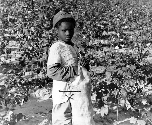 Black people meet cotton field