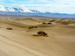 prairie(0.0), steppe(0.0), field(0.0), plateau(0.0), grassland(0.0), erg(1.0), soil(1.0), sand(1.0), plain(1.0), aeolian landform(1.0), natural environment(1.0), desert(1.0), dune(1.0), landscape(1.0), wadi(1.0), sahara(1.0), badlands(1.0),