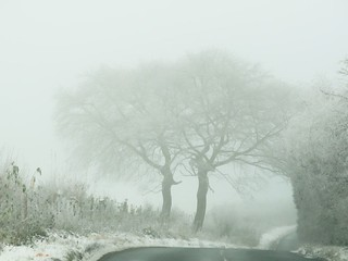 Two  Tree Fog