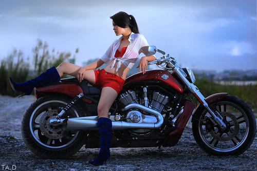 Harley Davidson #4