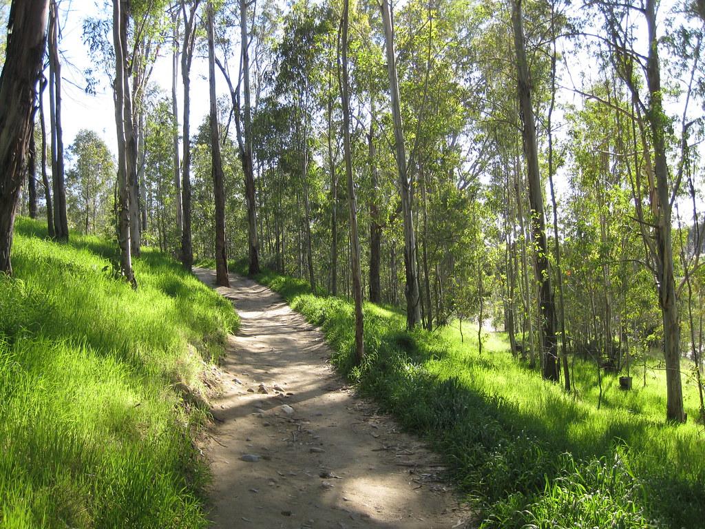 Eucalyptus Trail 2
