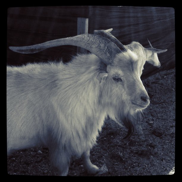 Satanic goat person | Flickr - Photo Sharing!
