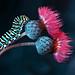 Caterpillar by Blackdiamond7075
