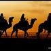 Camels Caravan ! by Bashar Shglila