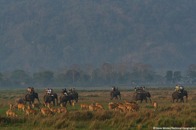 Tourists roaming through Kaziranga National Park