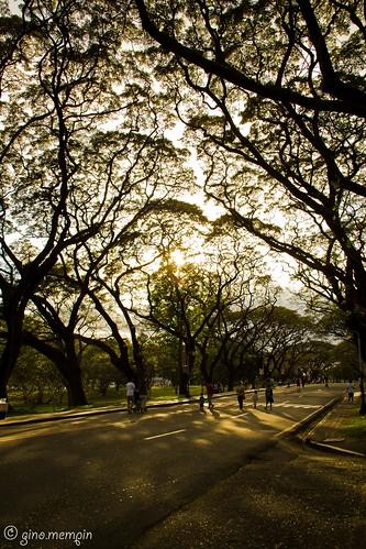 road trees sunrise universityofthephilippines
