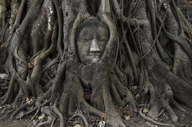Ayutthaya rtesta buddha piante