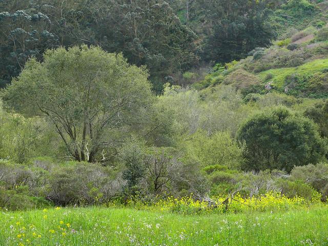 Glen Canyon Park 37 Flickr Photo Sharing