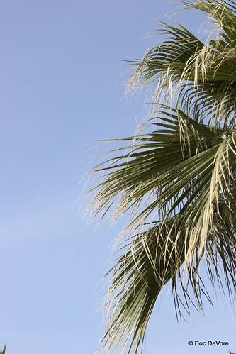 Palm Tree in Arizona Sun