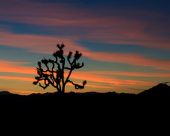 Joshua Tree national park-5.jpg