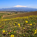 Etna between Winter and Spring (Sicily, Sicilia)