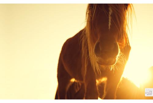 sunset horse sun yellow wales valleys callissacaffull cwmrhydymilwyr rhiwceiliogpencoed