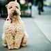 Patient Doggy by Jorge Quinteros