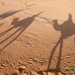 Shadows of a Small Camel Caravan in Wadi Rum, Jordan