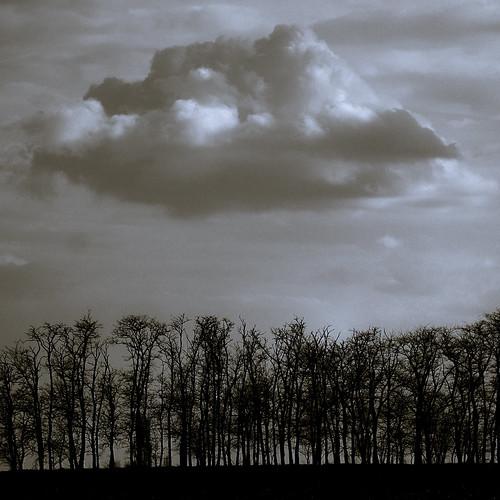 trees sky cloud monochrome spring hungary fields ég felhő tavasz magyarország föld fák szántóföld countryvidék
